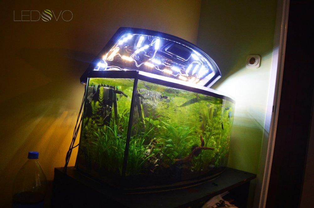 Oświetlenie Akwarium Sklep Online Ledovo