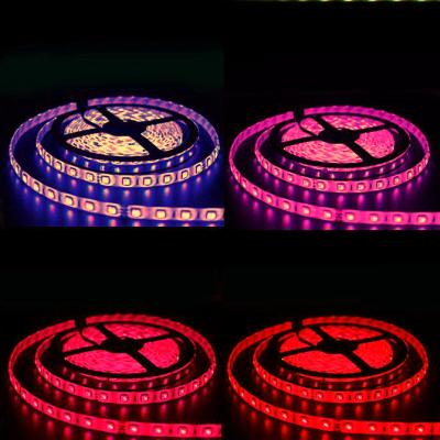 TAŚMA PREMIUM LED RGBW Epistar 5050 300 LED /standard/ 5mb