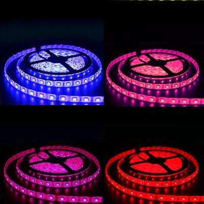 TAŚMA PREMIUM LED RGBW RGB+ MultiWhite CCT Epistar 5050 300 LED/ROLKA 10 mb/ 24V